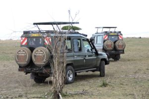 Rear View Land Cruisers