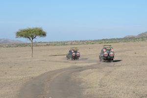 Lone Tree On Safari