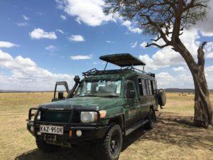 Sunny Safari Tour