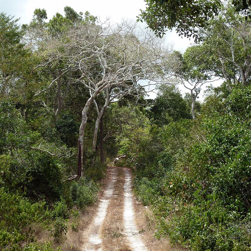 Arabuko Sokoke forest reserve - Kenya