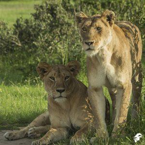 Kenya Safaris | Africa Safari Holidays | 2019/20 Kenya Tours & Prices