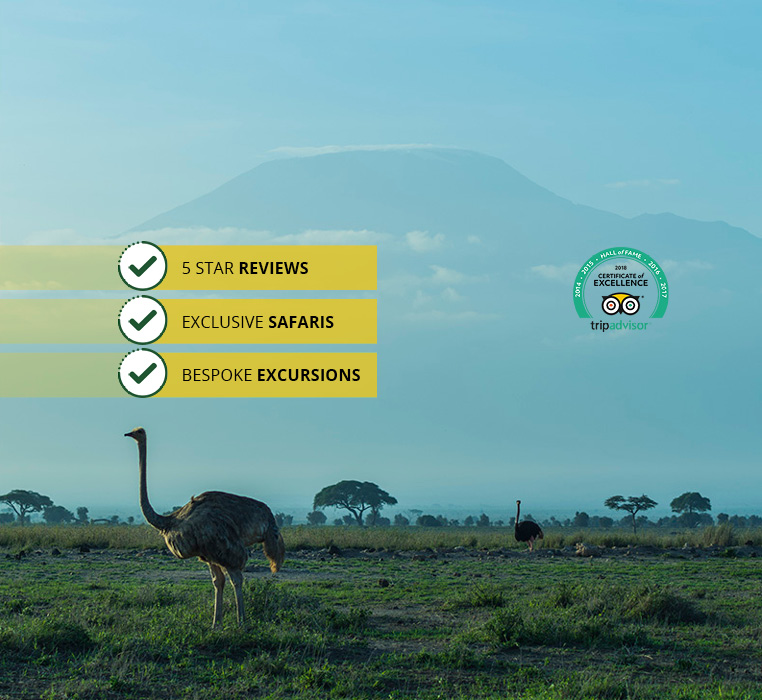 3 Days, 2 Nights Tsavo West &#038; Amboseli National Parks Safari<br /><small>Nairobi to Nairobi</small>