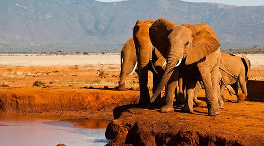 Tsavo East Elephants