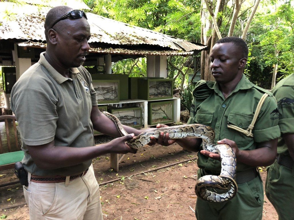 Tour guide holding snake