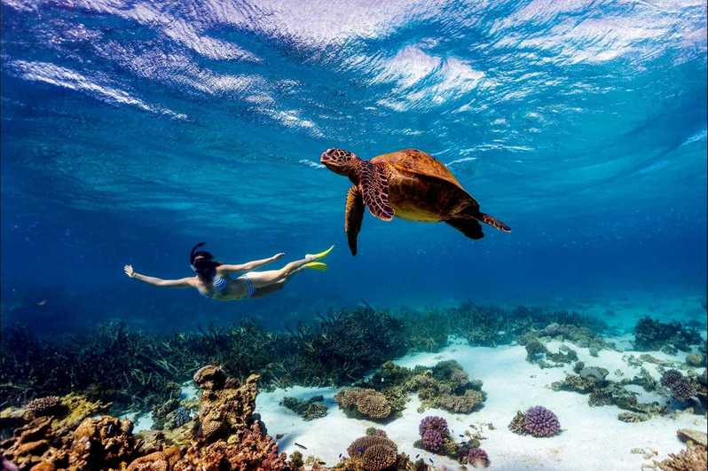 Women swimming with turtle