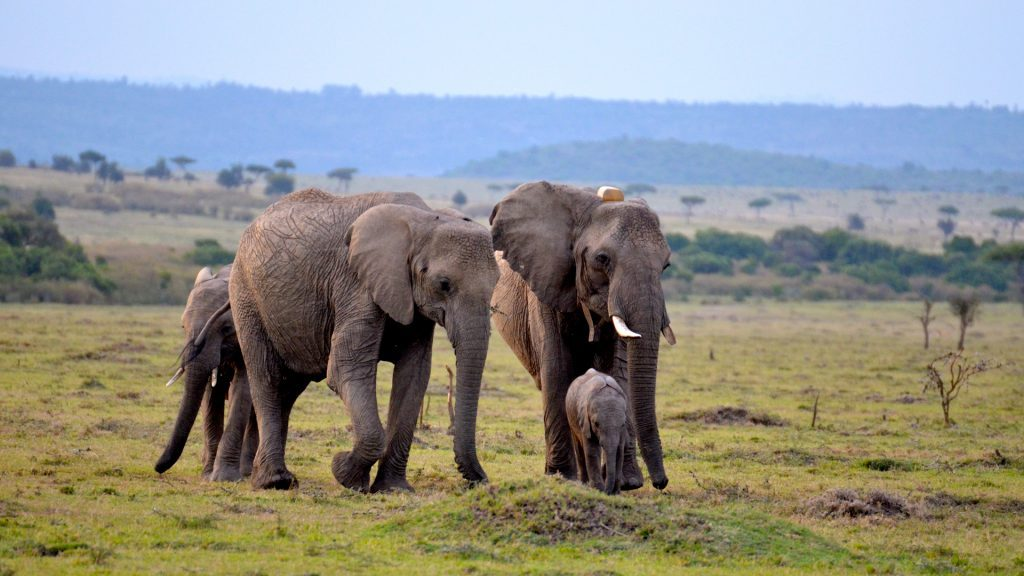Natural World Kenya Safaris - East Africa Luxury safari tours in Kenya, Tanzania, Zanzibar, Uganda & Rwanda