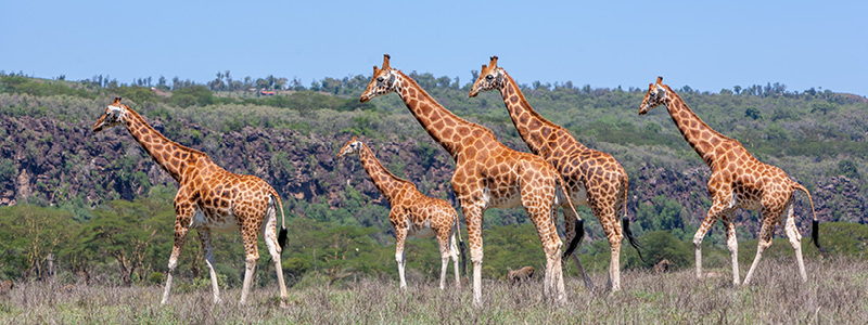 Natural Tours - Wildlife of Uganda