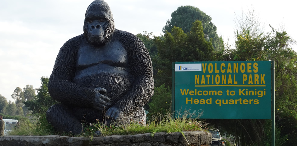 Gorilla Trekking Safari tours in Uganda & Rwanda with Natural World Kenya Safaris