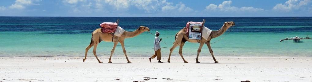 Diani Beach Kenya-Excursions, day trips, safaris, tours and things to do in Diani | Natural World Kenya Safaris