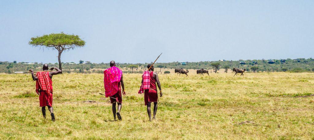 Maasai guides walking across the open savannah of the Masai Mara