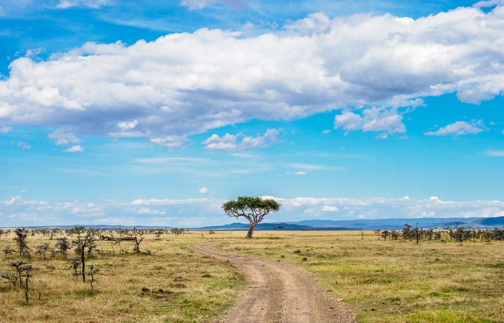 The savannah landscape of the Masai Mara